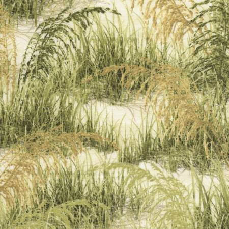 Beach Haven - Grass