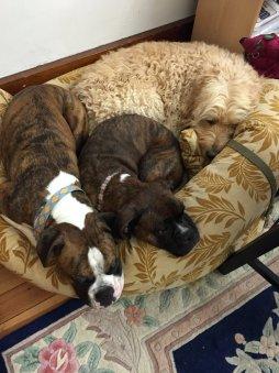 Cooper, Ahni, and Apollo