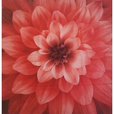 Dream Big Digital Print Panel - Red - 24389-5