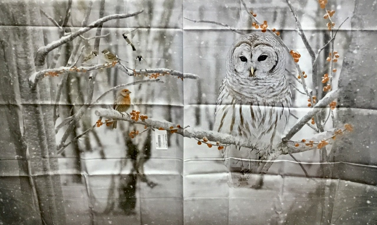 Owl Panel S4722-126 Birch