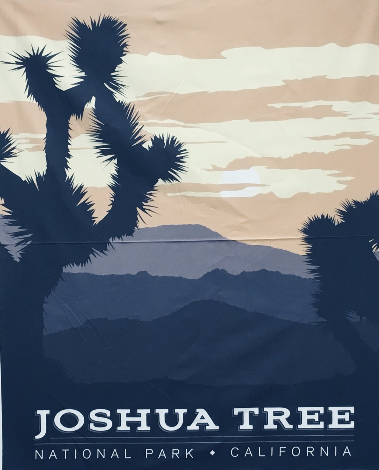 JOSHUA TREE NATIONAL PARKS PANEL P8791 by Riley Blake
