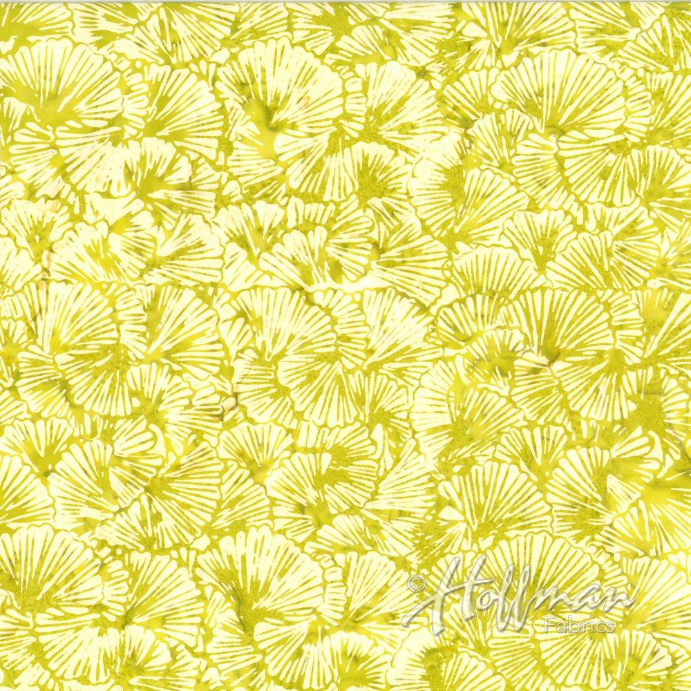 Key Lime P2925-481