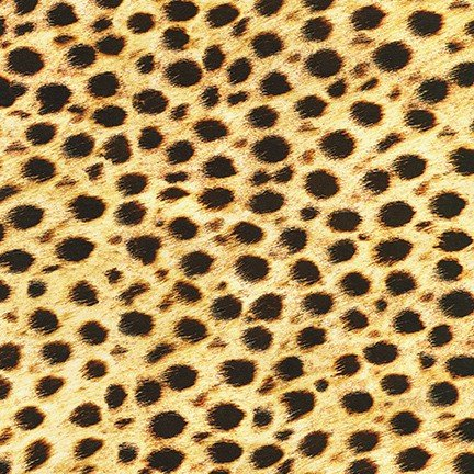 Animal Kingdom Cheetah 19871 286 Wild