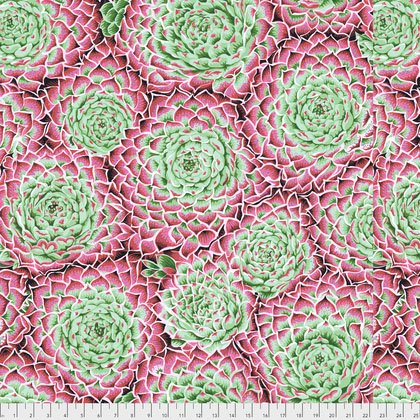 Spring Succulent Pink PWPJ091.PINKX