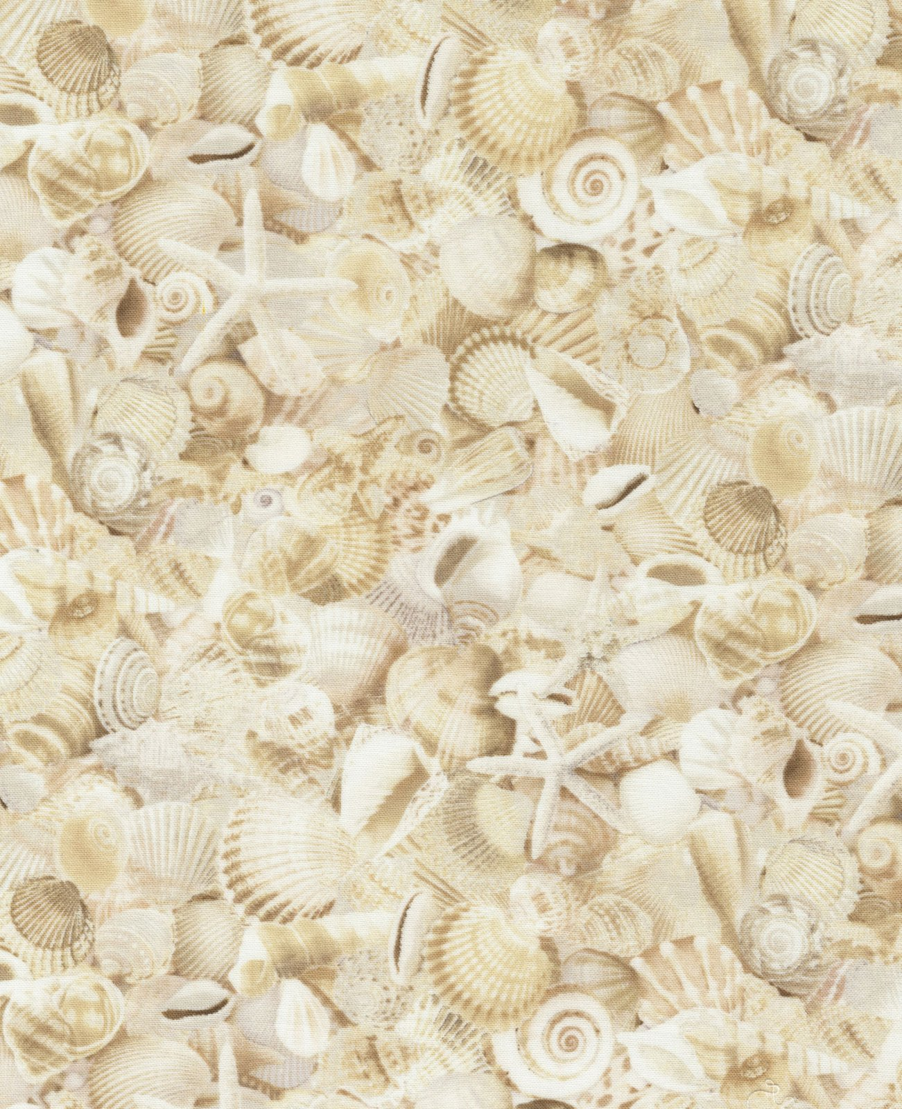 Beach - Packed Seashells