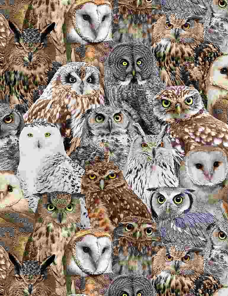 Packed Realistic Owls - Multi