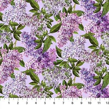 Chelsea-Lilacs