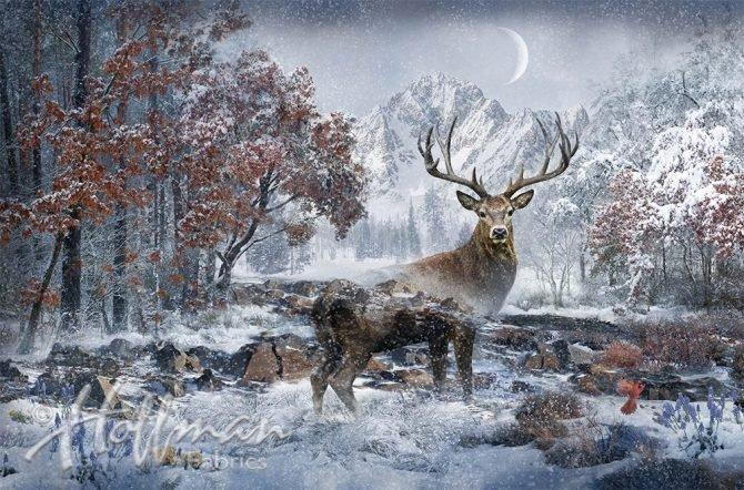 December Stag Q4460-597
