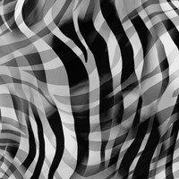 Zebra Skin Black