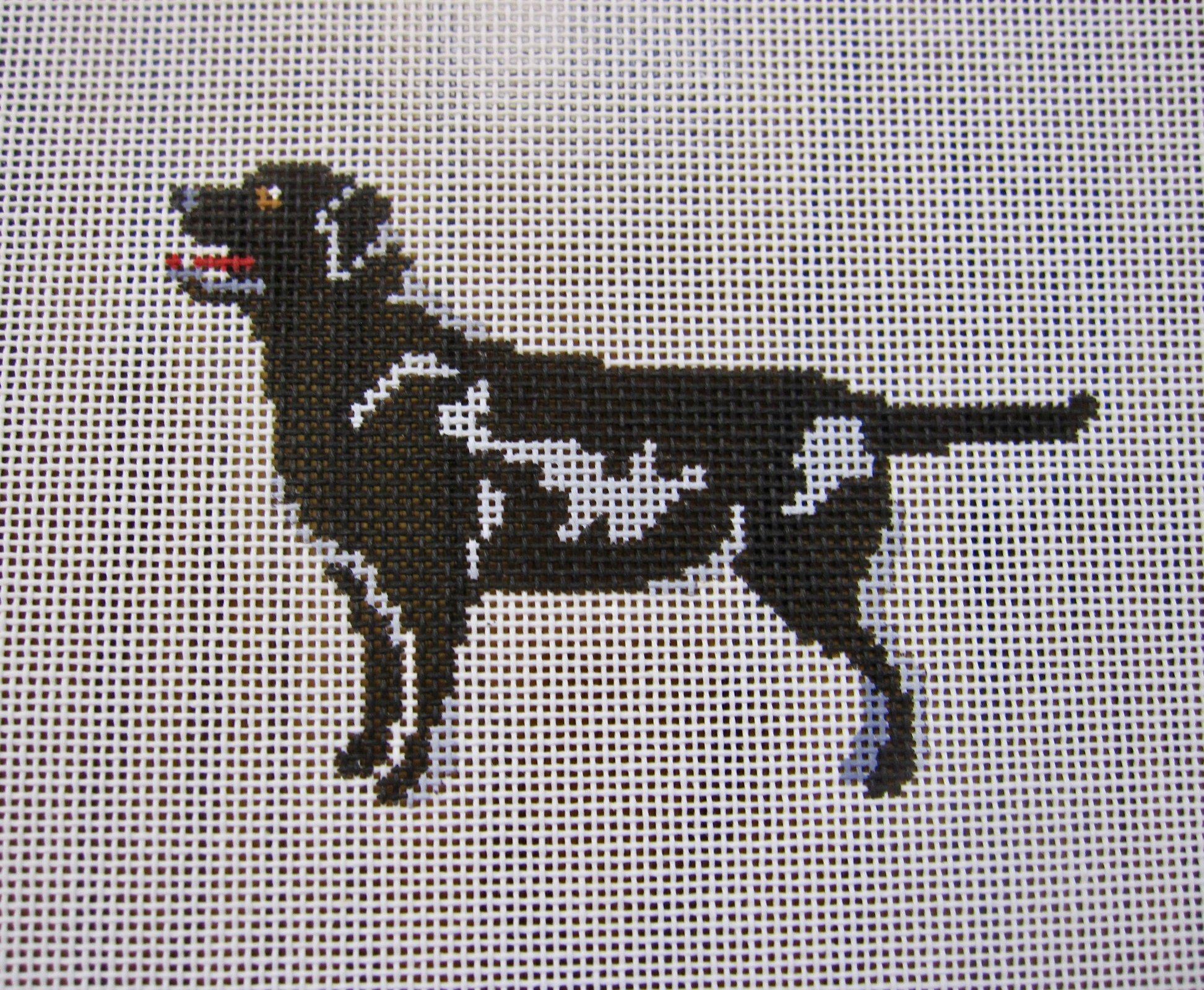 Quincy Black Labrador