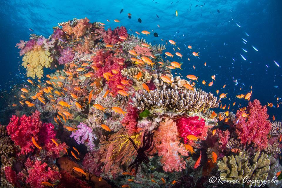 Fiji Paradise Taveuni 2020 Deposit