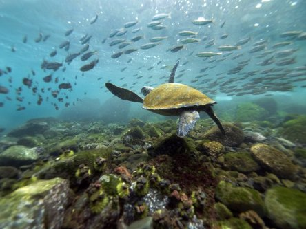 Galapagos live aboard dive trip