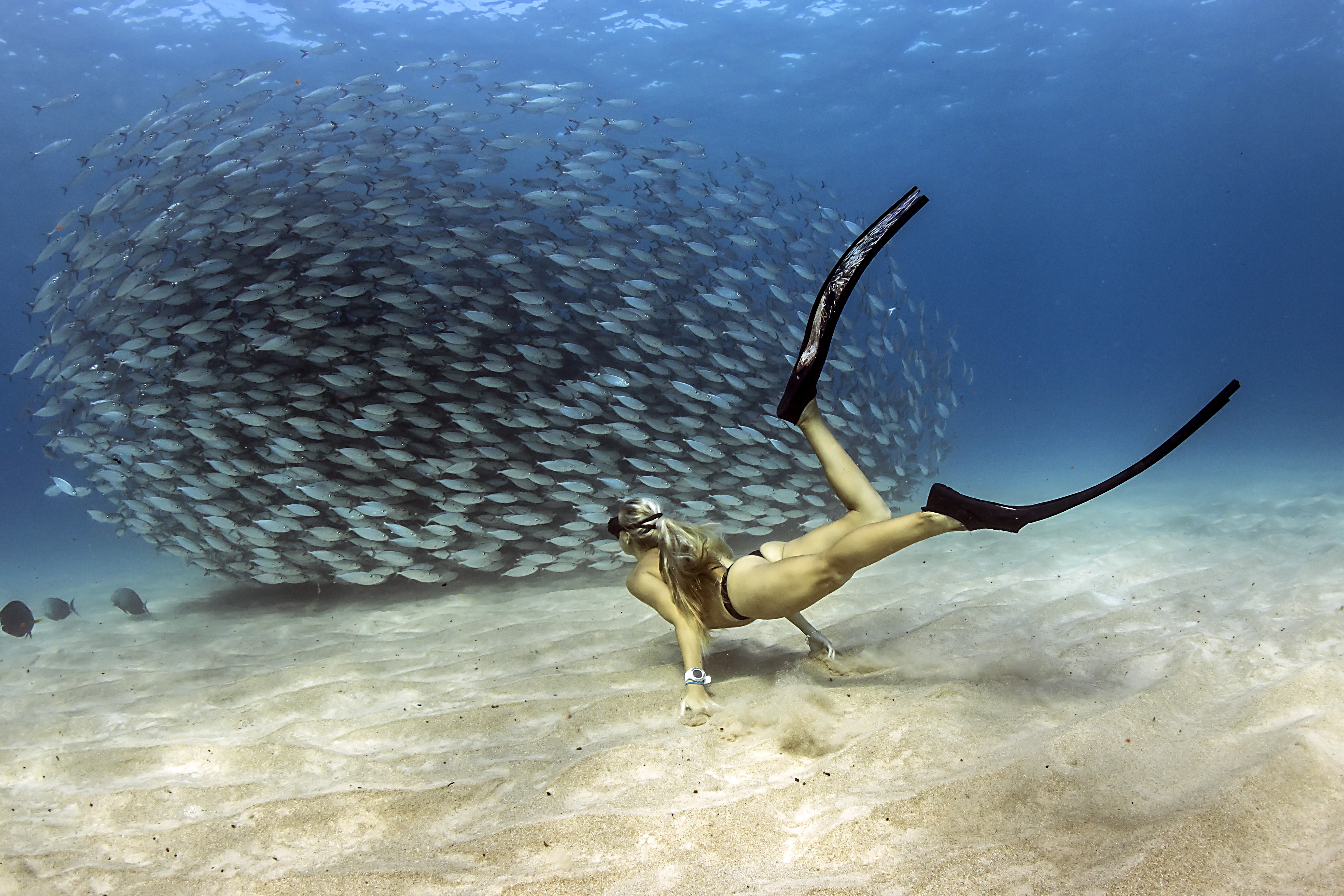 Kona Underwater Shootout Entry Fee
