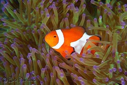 Atlantis resort scuba dive travel trip