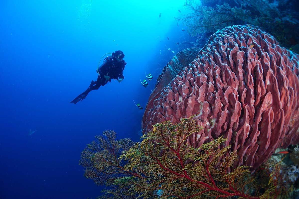 tubattaha scuba diving