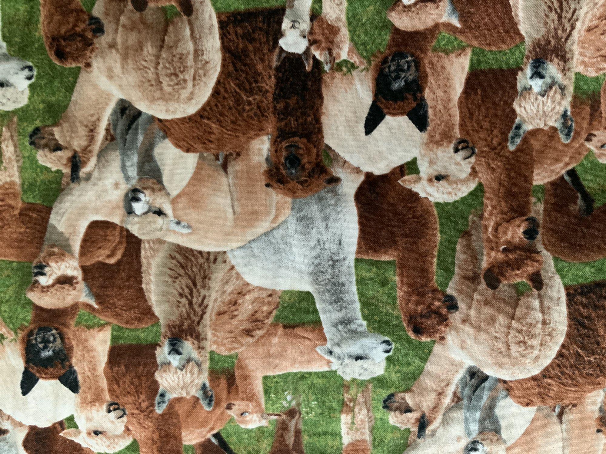 Alpacas on Green-  Farm Animals