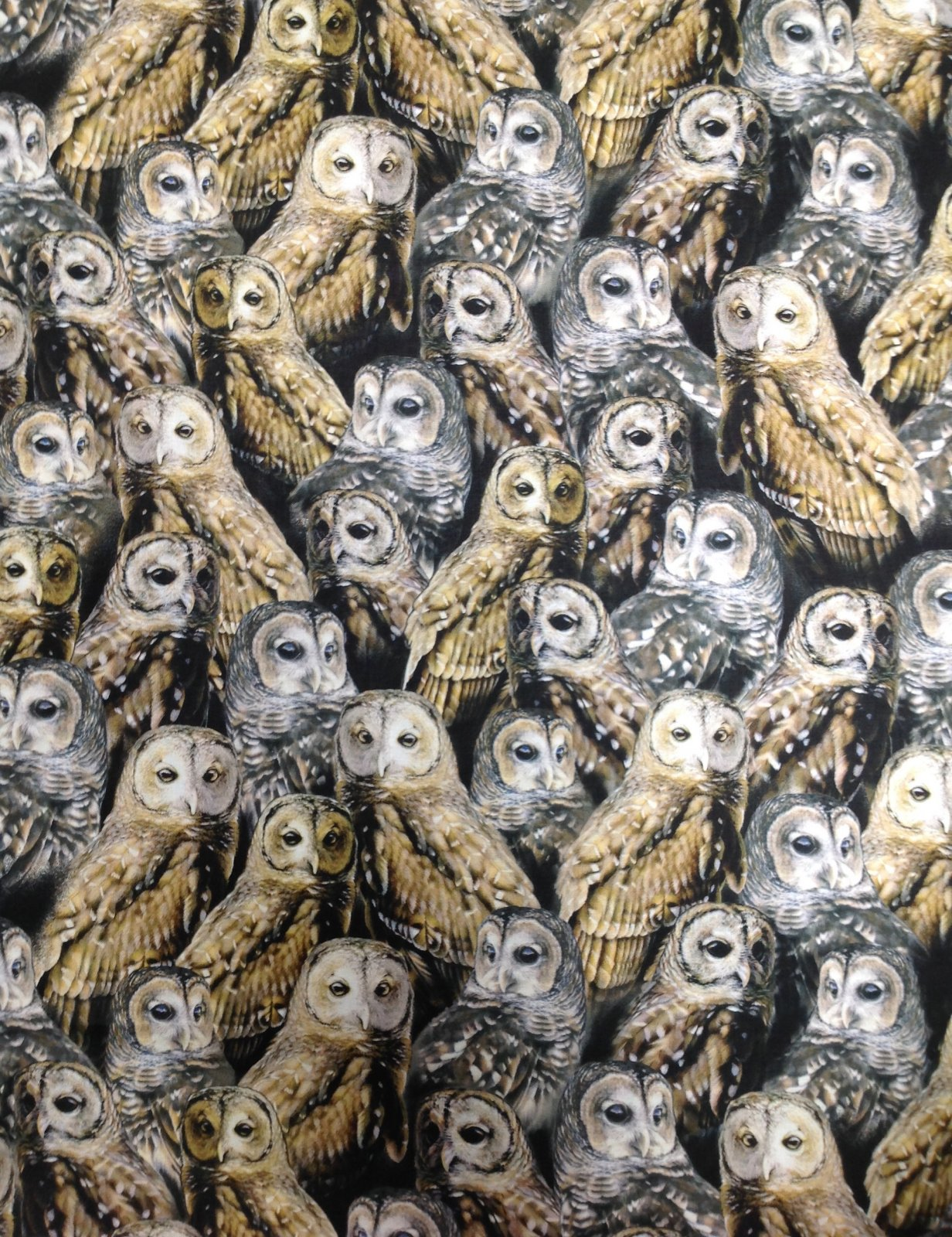 Nocturnal Wonders All Over Owls Black