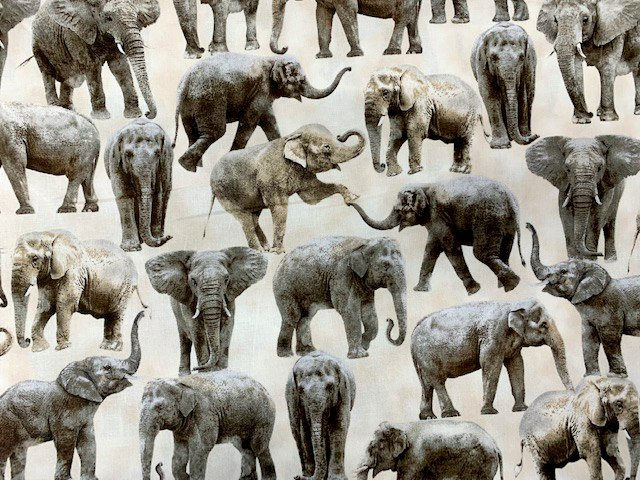 Elephants by Timeless Treasures (WILD-C6584)