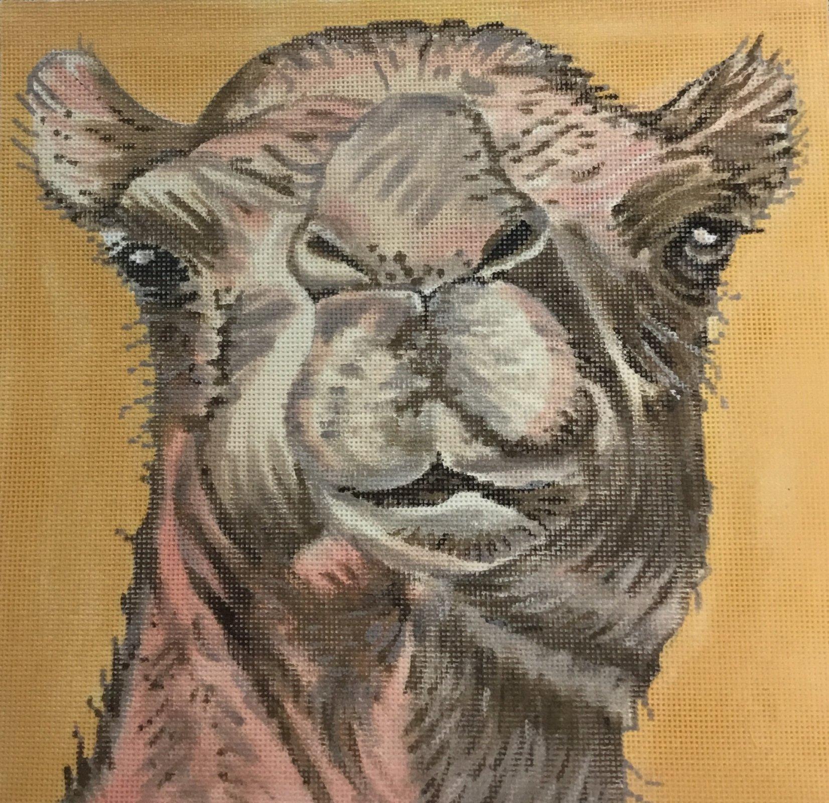 Camel, 13 ct., 13 x 13