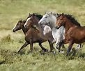 Wide Open Spaces Q4419-98 Moss - Horses