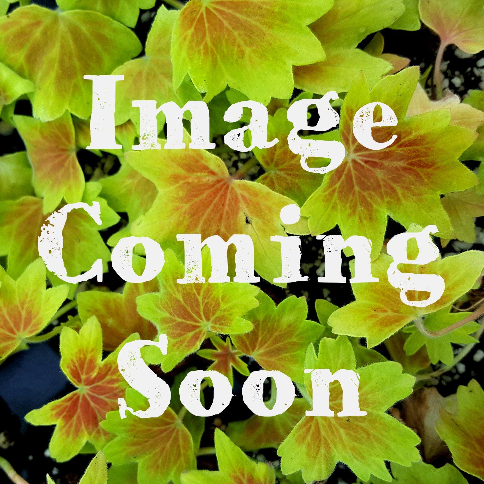 Sun annuals check it out izmirmasajfo