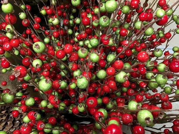 Red and Green Winter Berries