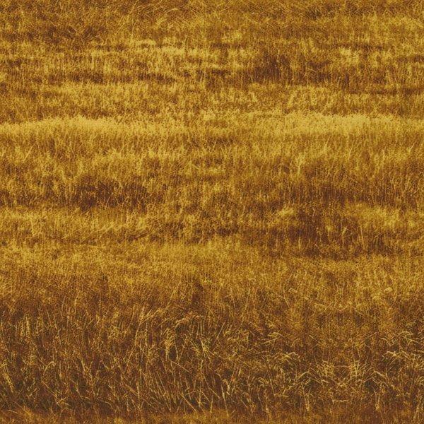Danscapes 2411/001-Wheat Field