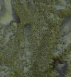 Kota Batiks-Shamrock 41000/66