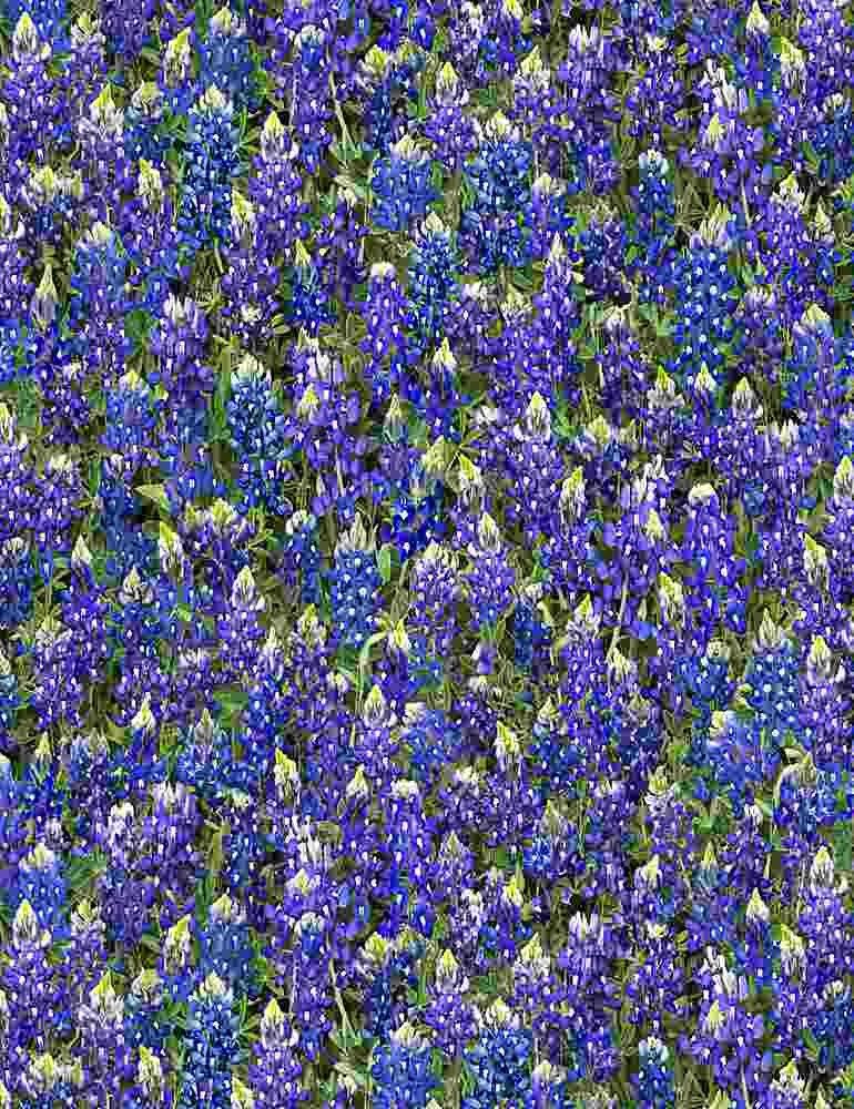 Bluebonnets-Fleur-C7572