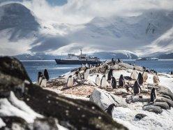 Penguins and the MV Ortelius