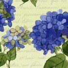 Heavenly Hydrangea Y2255-58