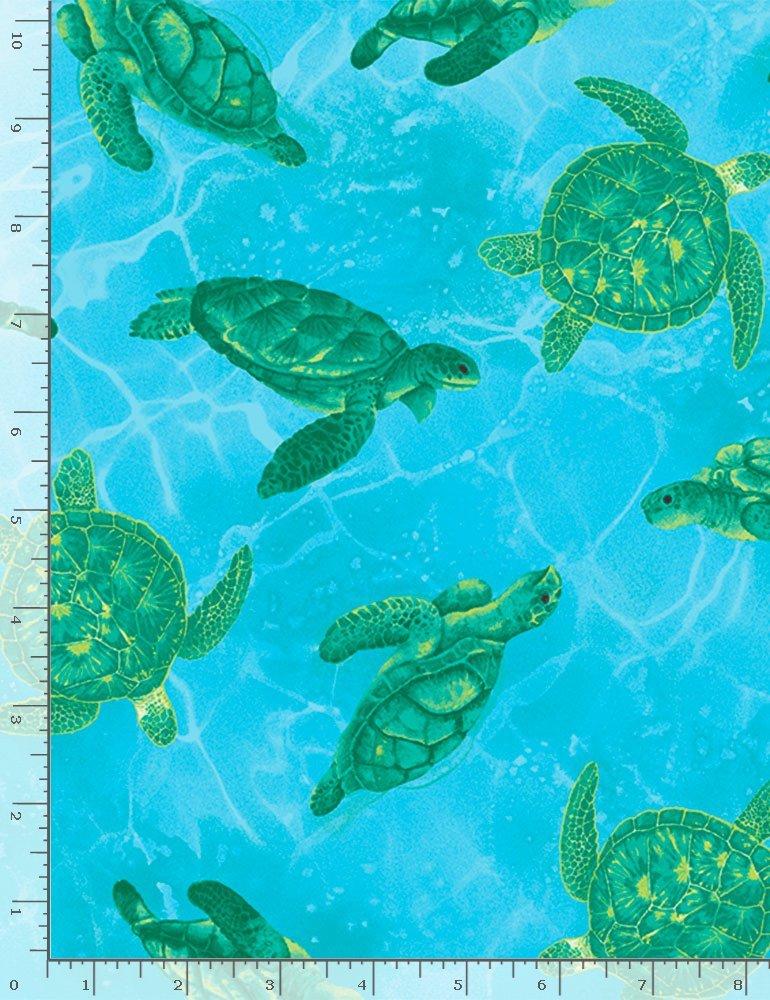 Sea Turtles on aqua