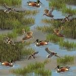 Windham Fabrics - Lakeside by Whistler Studios - All Over Flying Ducks
