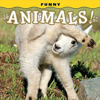 Funny Animals! Book