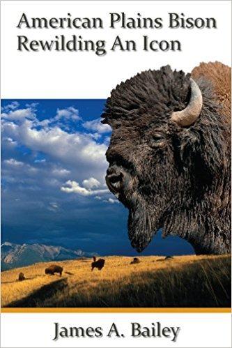 American Plains Bison Rewilding An Icon