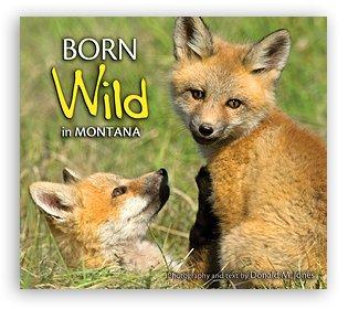 Born Wild in Montana