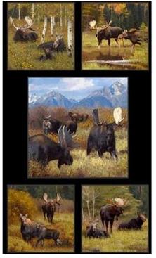 Moose - 5 Scene Panel