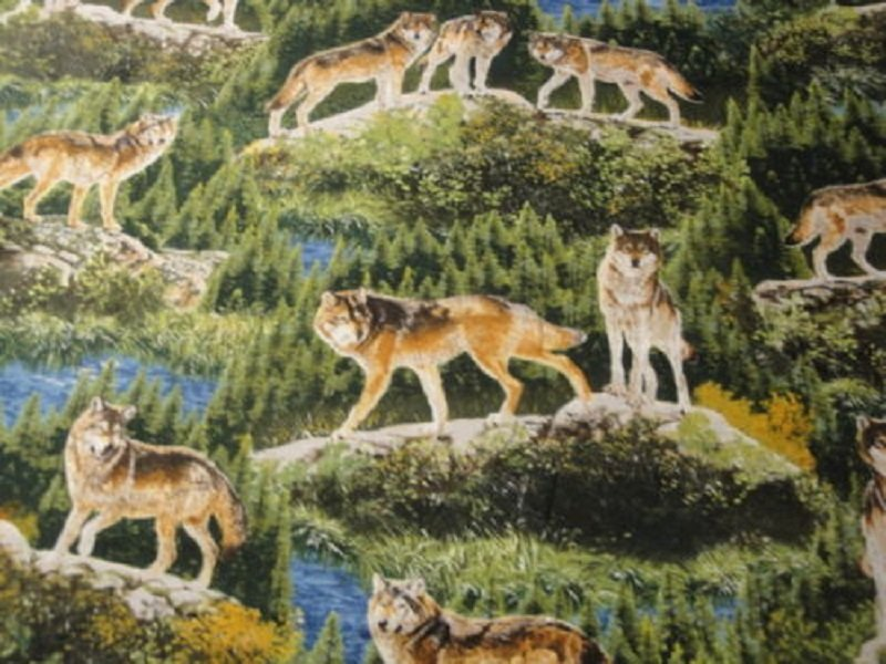 Bringing Nature Home Wolves-Robert Kaufman-BTY