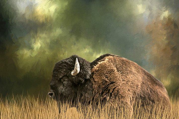 ANI24 Reclining Buffalo