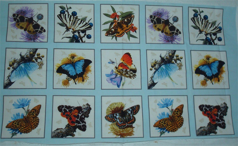 BUTTERFLIES AND MOTHS - BLUE