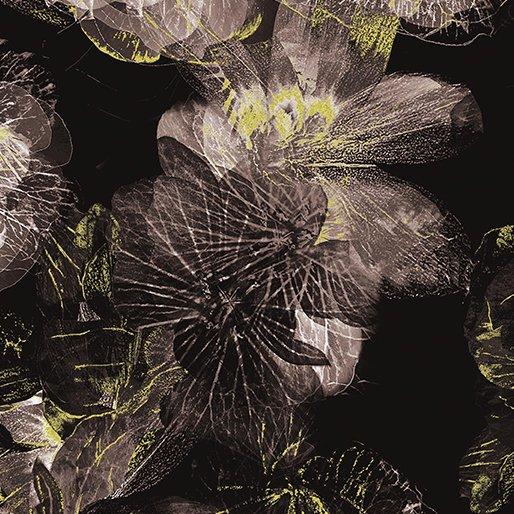 Floral Impressions Photo Impressions Black