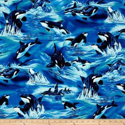 North American Wildlife Orcas Ocean  Kaufman