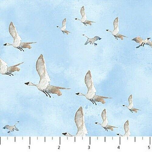 Atlantic Shore Birds in Flight  Northcott
