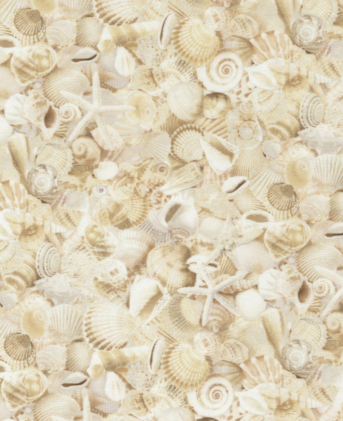 1905 Natural Seashells