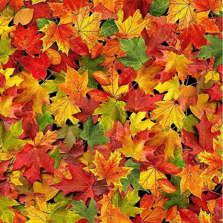 Timeless Treasures Fall Foliage C8650 Multi Autumn Medium Leaves