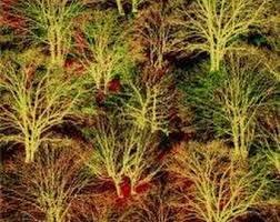 Marblehead - Trees
