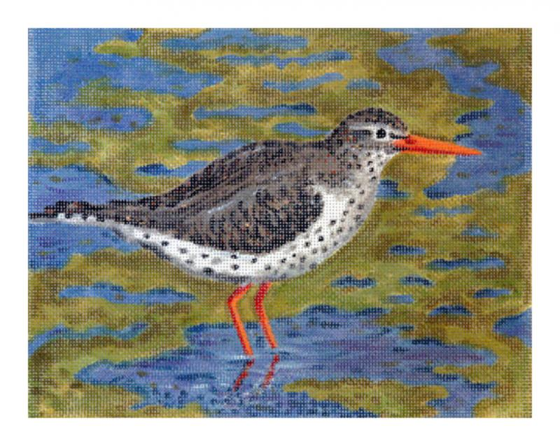 CL3615 - Spotted Sandpiper