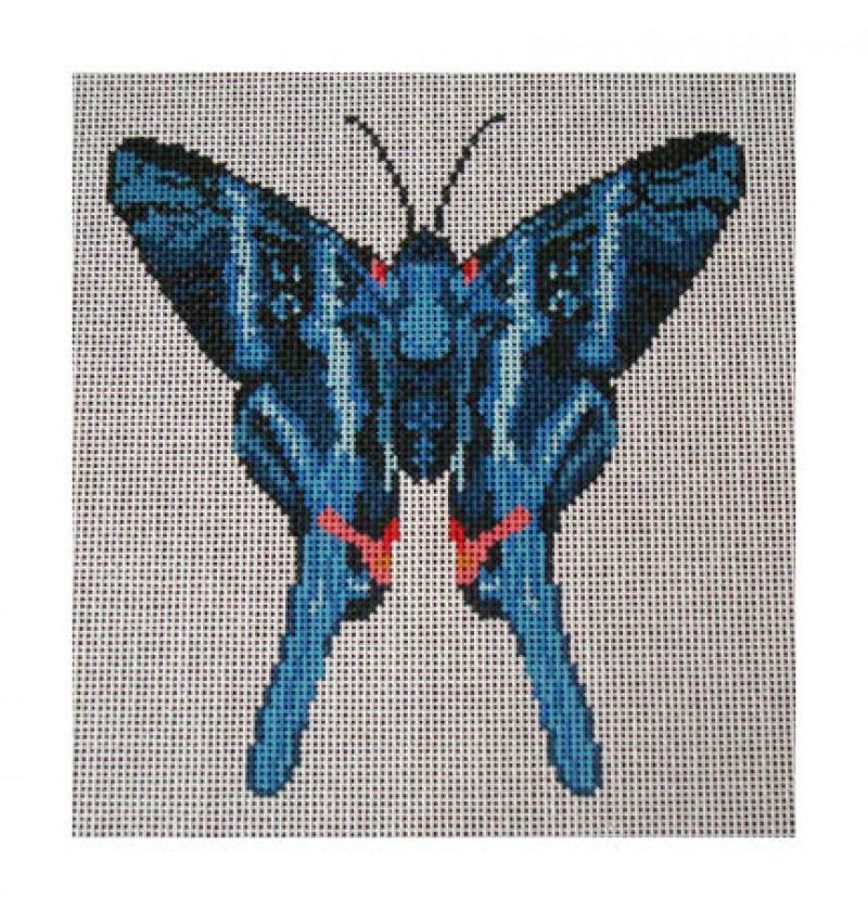 DH3623 - Blue Metalmark