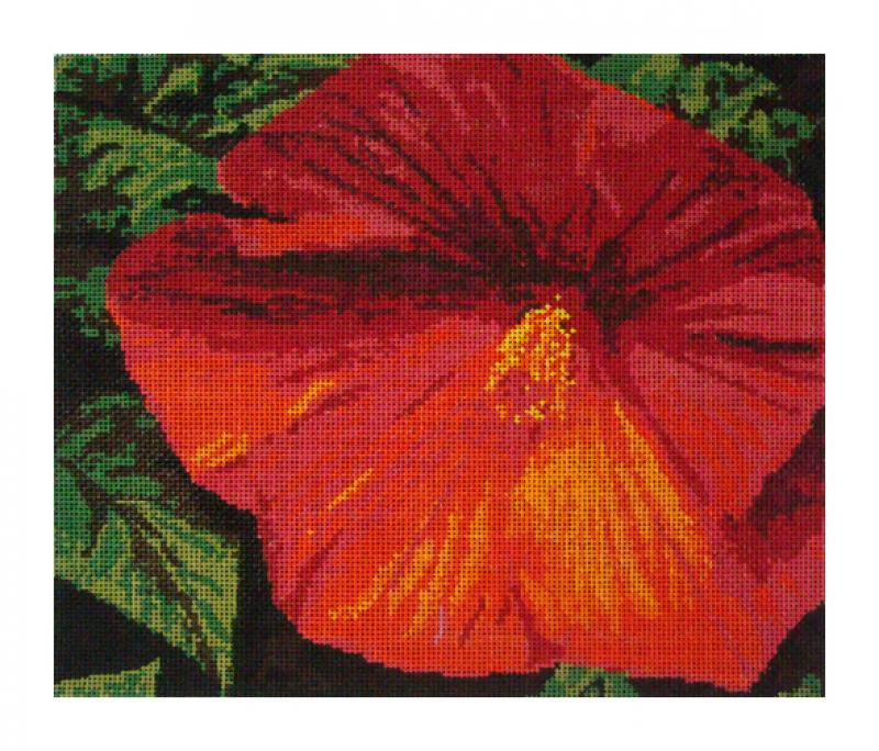 DH3643 - Hibiscus