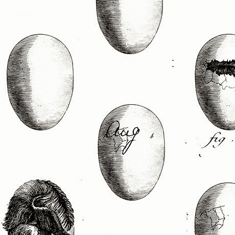 Fowl Play Fresh Eggs Off White